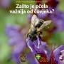 Izložba, Zašto je pčela važnija od čovjeka?